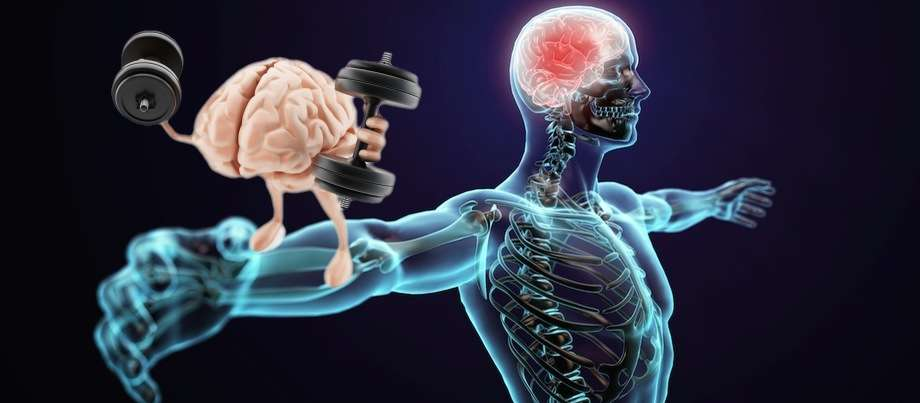 Je krijgt sneller je kracht terug dankzj onze spiergeheugen